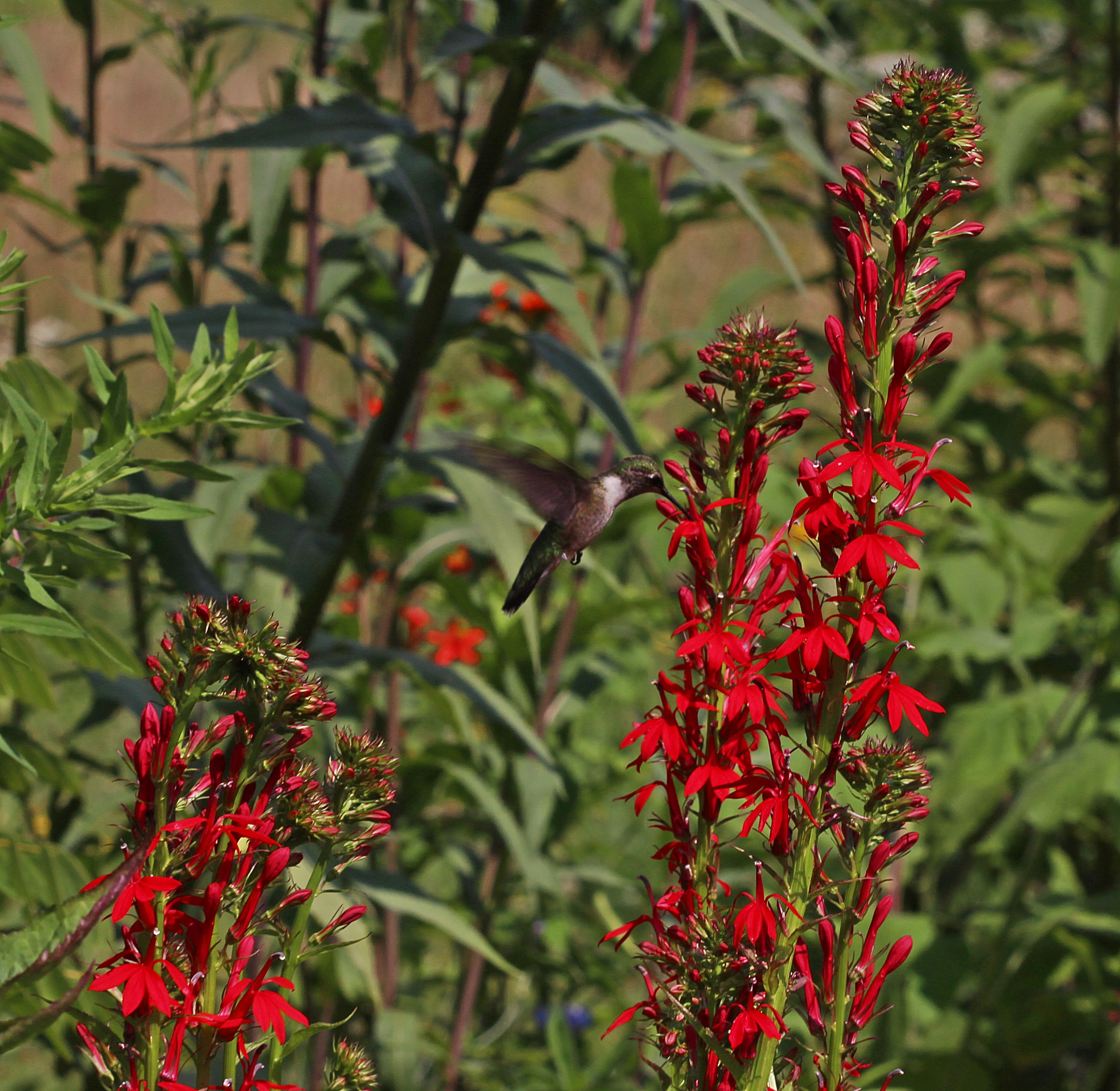 Garden Gallery – 1001 Pollinator Gardens